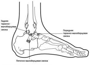 схема связок стопы