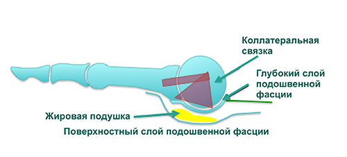 жировая подушка пальца
