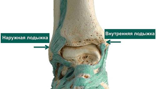 Модель голеностопного сустава